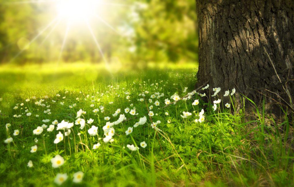 сонячний промінь у серці на радість